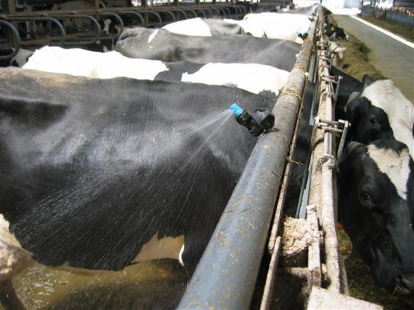 Cooling Systems to Protect Cows from Heat Stress