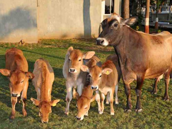 Ensure Cow Health and Production at your Farm (From Feed to Manure)