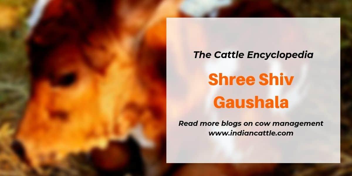 shree shiv gaushala