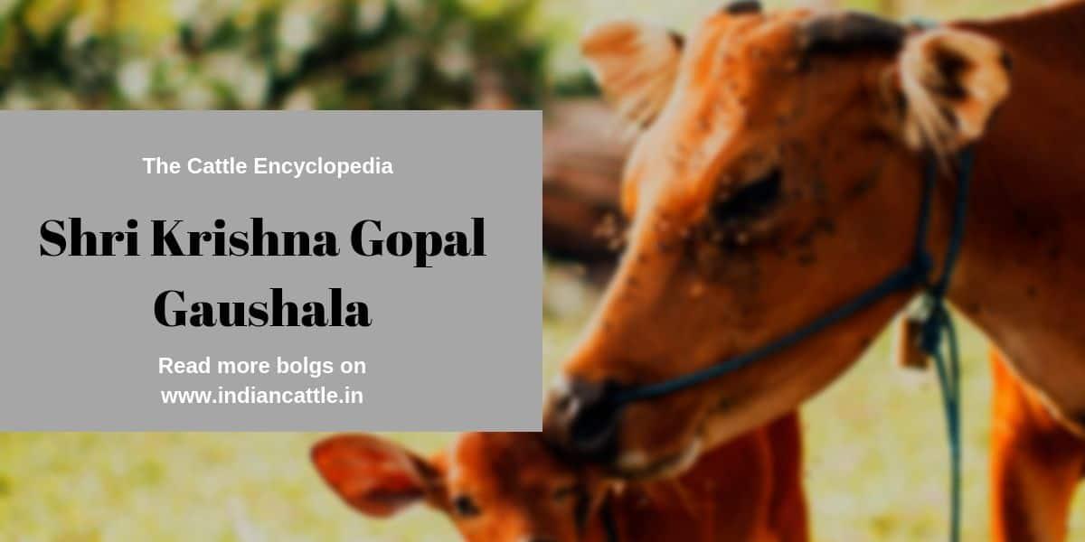 shri krishna gopal gaushala