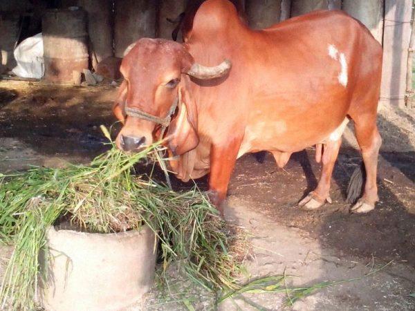 Shri Akot Gorakshan Seva Samiti