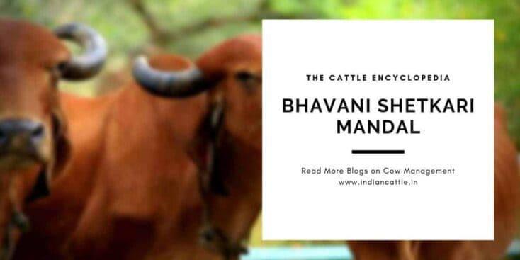 bhavani shetkari mandal
