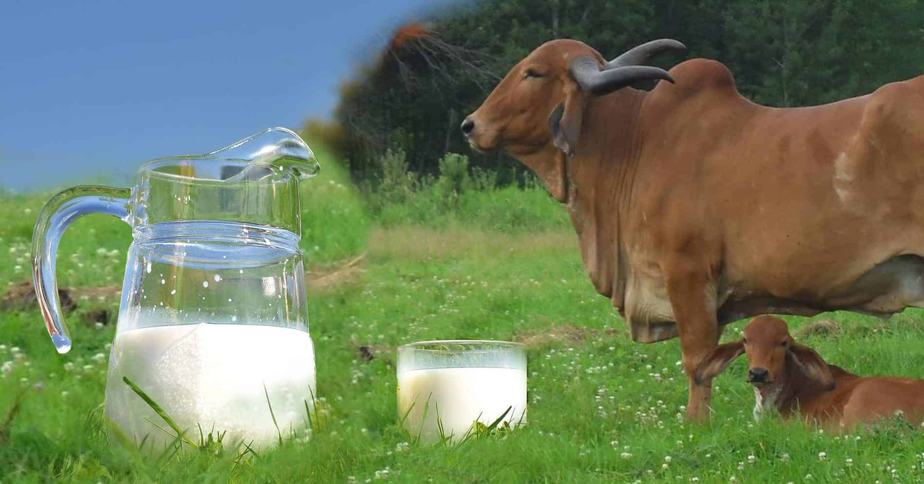 Loans for Dairy sector