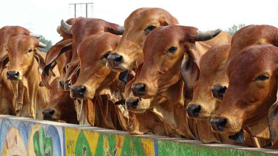 Animal Husbandry Sector