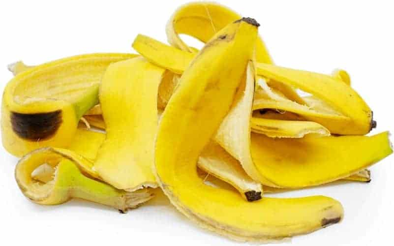 banana peels as cattle feed
