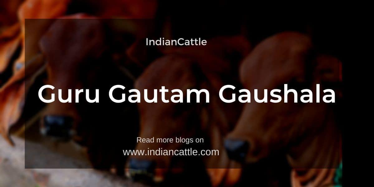 Guru Gautam Gaushala