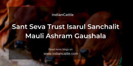 Sant Seva Trust Isarul Sanchalit Mauli Ashram Gaushala