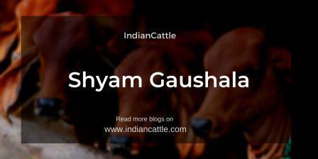 Shyam Gaushala