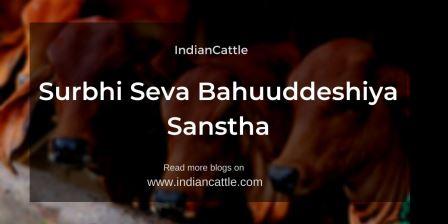 Surbhi Seva Bahuuddeshiya Sanstha