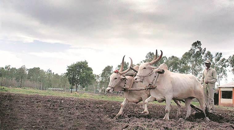 Cow based Natural Farming