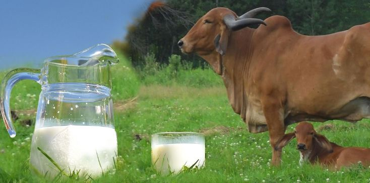 Tips for Successful Dairy Farming in India