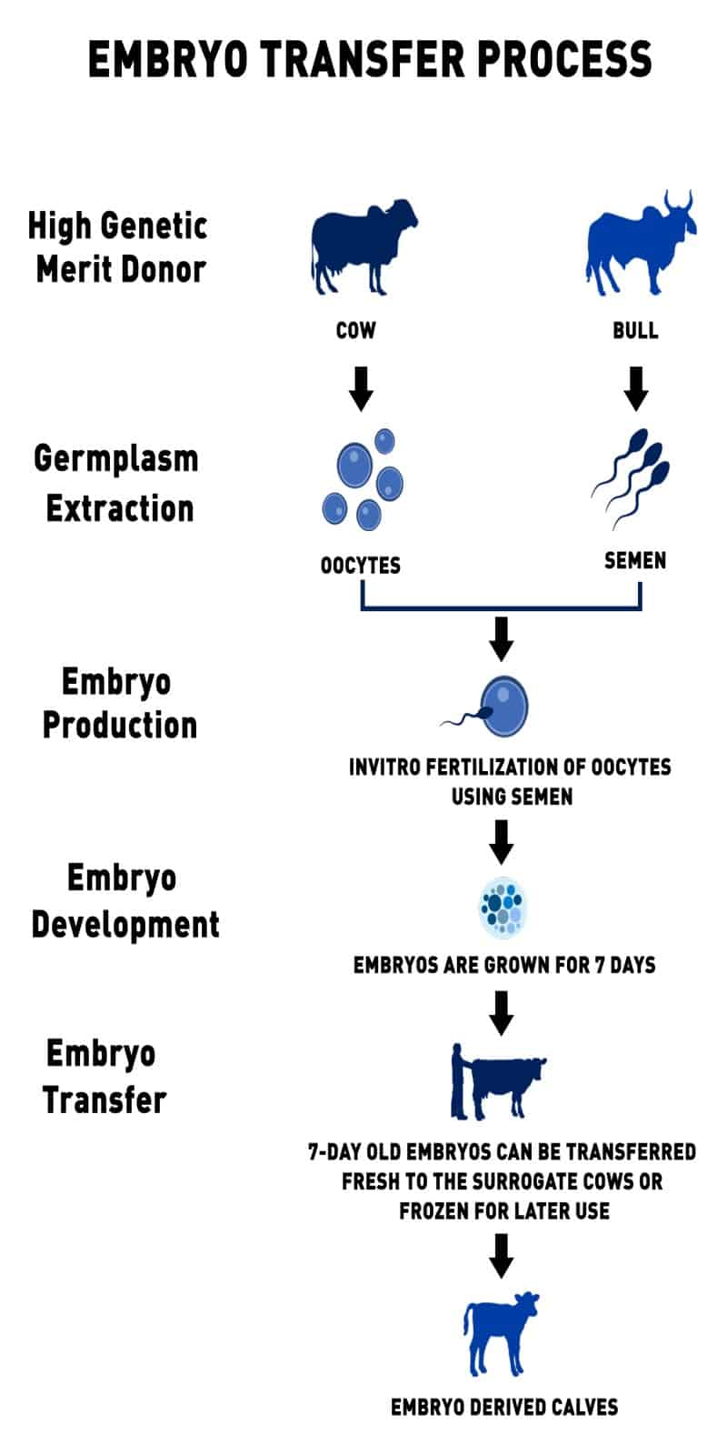 Embryo Transfer Technology